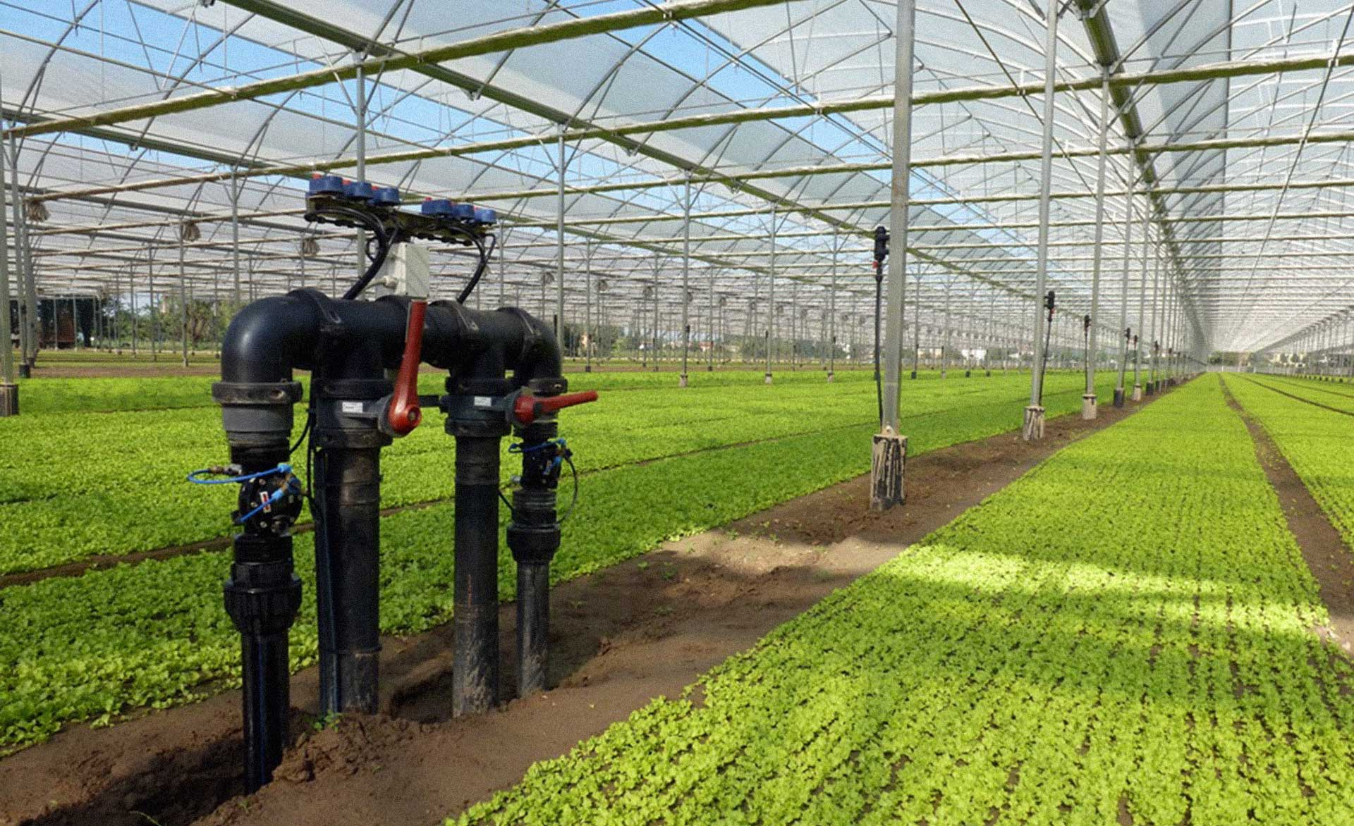 microirrigazione foto irrigazione veneta